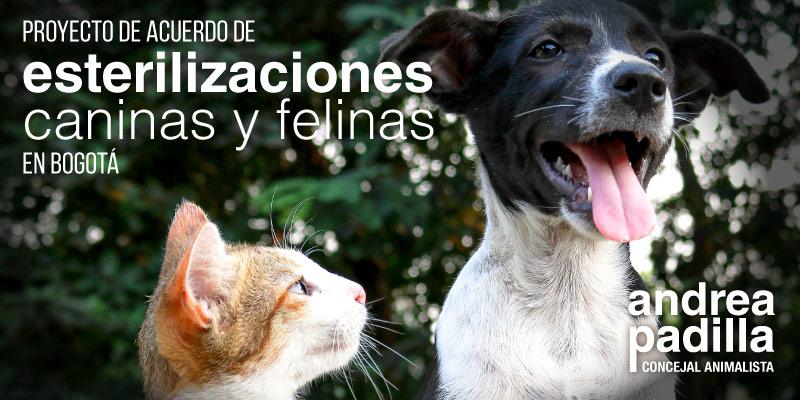 Proyecto de acuerdo de esterilización de gatos y perros en Bogotá