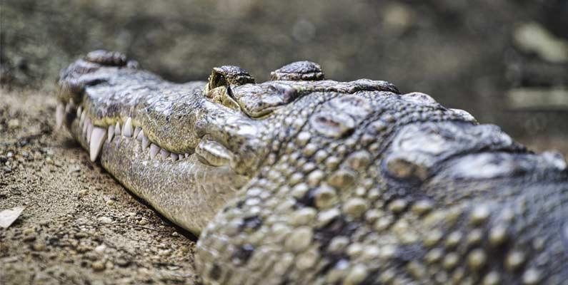 En la piel del caimán