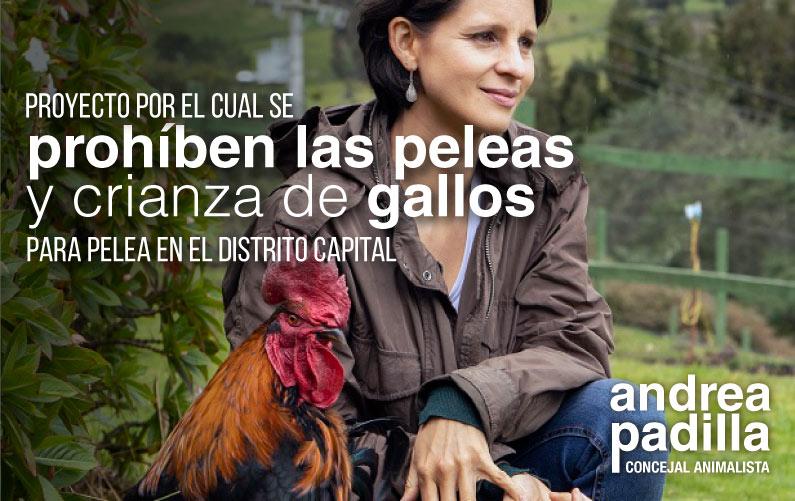Proyecto de acuerdo en el Concejo de Bogotá para prohibir la crianza de gallos y su uso para peleas