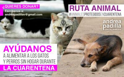 ¡Ayúdanos a alimentar a gatos y perros sin hogar durante la cuarentena en Bogotá!