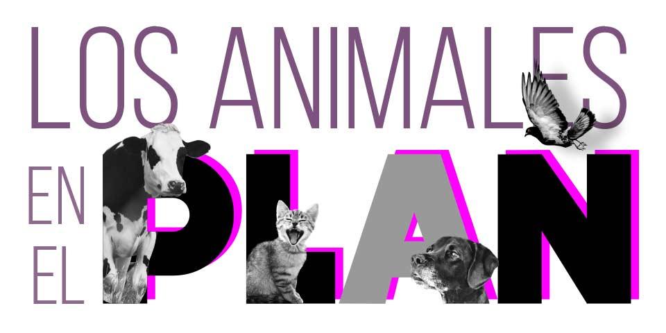 80% más de presupuesto para los animales
