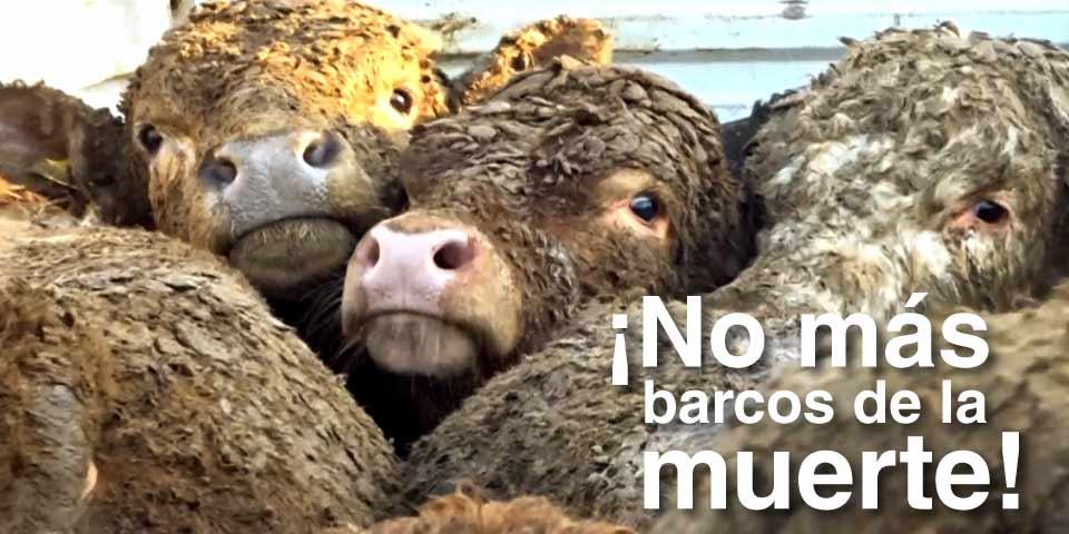Proyecto de ley para acabar con la exportación marítima de animales vivos con fines de consumo, cría, levante, producción o engorde