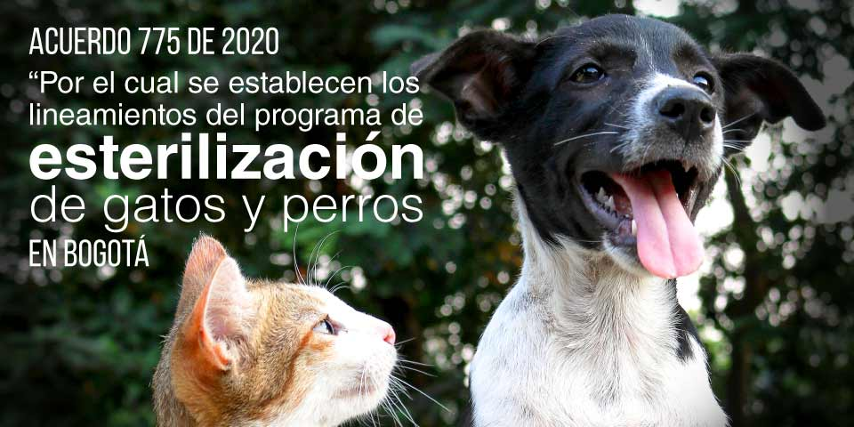 ACUERDO 775 DE 2020