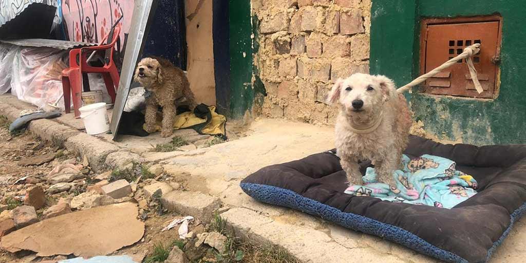 Animales en riesgo por mala planeación en el Instituto Distrital de Protección Animal