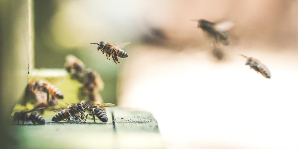 Mesa interinstitucional en favor de las abejas | Marzo y abril 2021
